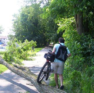 Arturo over fallen tree.JPG.jpg