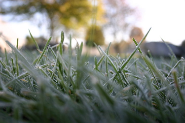 frost on grass by Ambarish a question of focus.jpg