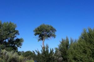 tree (facing west)