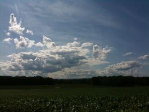 corn under a western Massachusetts sky