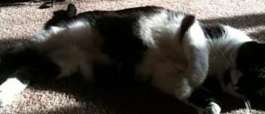 Feline state of post-bellyrubbing bliss.