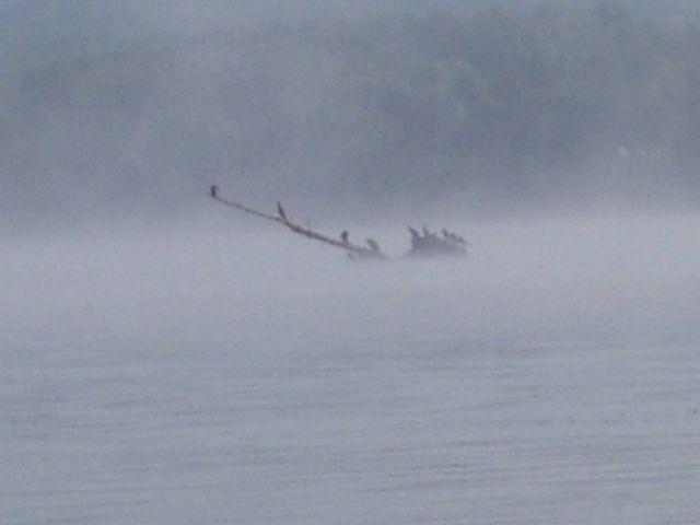 cormorants.JPG.jpg