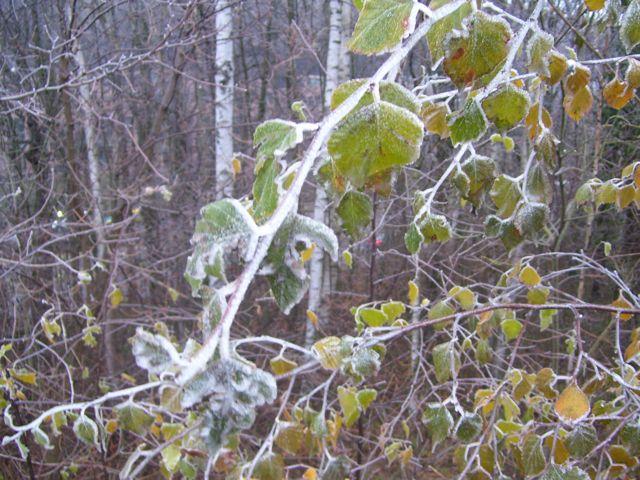 frost in LUX2.JPG.jpg