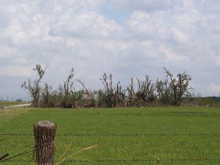 tornado damage.JPG.jpg